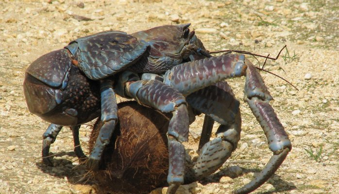 15-of-The-Most-Terrifying-Animals-You-Never-Knew-About-3 (698x400, 83Kb)