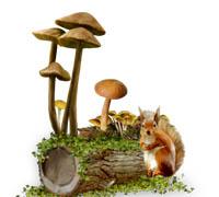 грибочки (200x180, 28Kb)