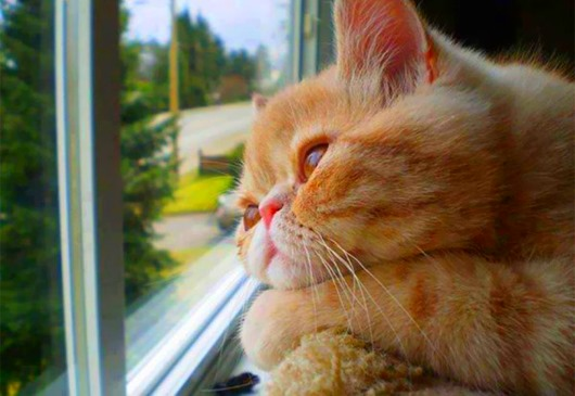 cat-waiting-window-65_thumb[1] (530x365, 52Kb)
