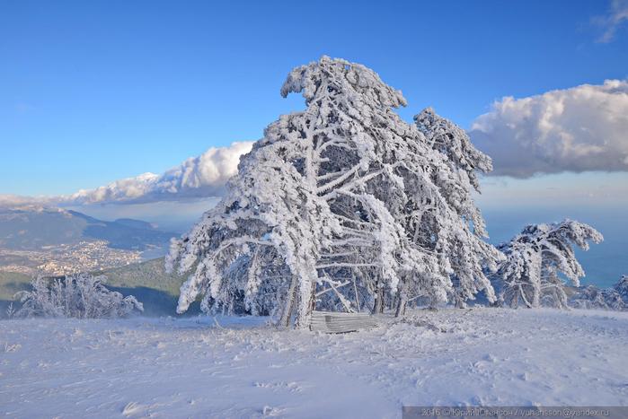 ай-петри зимой фото 17 (700x467, 337Kb)