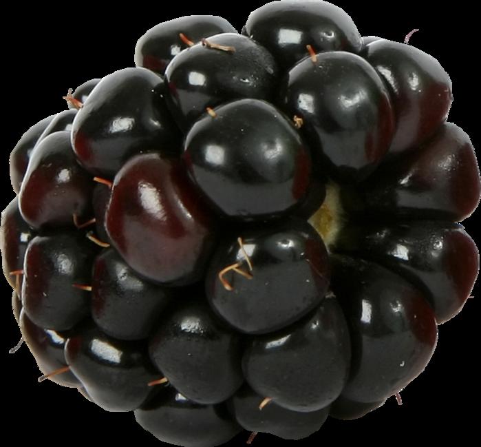 blackberry001 (700x649, 468Kb)