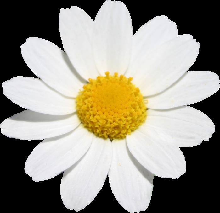 flower004 (700x679, 374Kb)