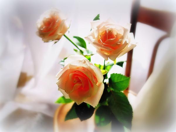 цветочный аромат лета 14 (600x450, 151Kb)