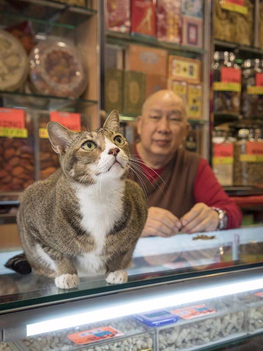 кошки в магазинах фото 1 (525x700, 409Kb)
