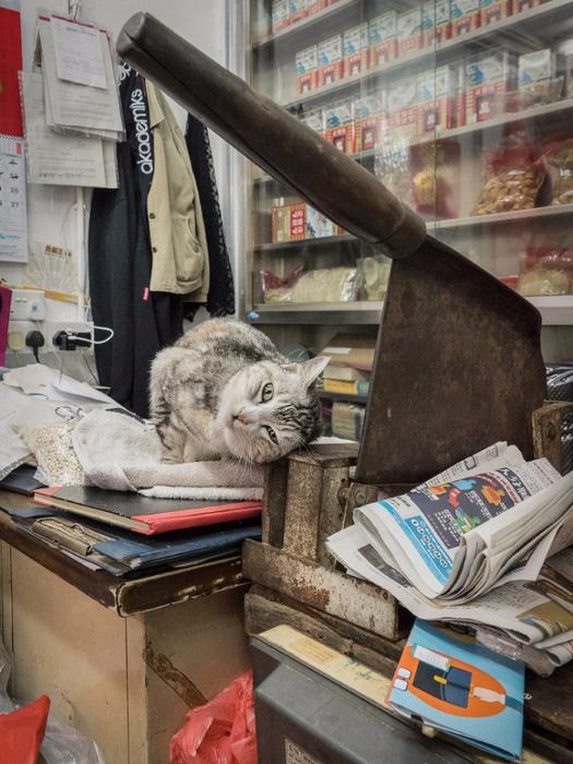 кошки в магазинах фото 5 (525x700, 444Kb)