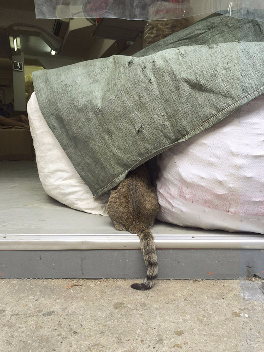 кошки в магазинах фото 11 (525x700, 384Kb)