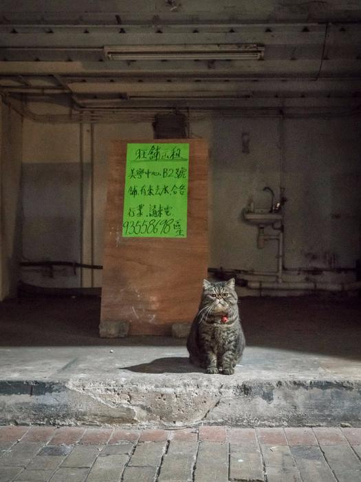 кошки в магазинах фото 14 (525x700, 364Kb)