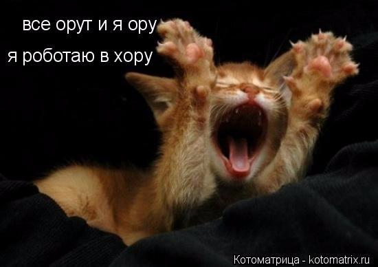 kotomatritsa_- (550x388, 116Kb)