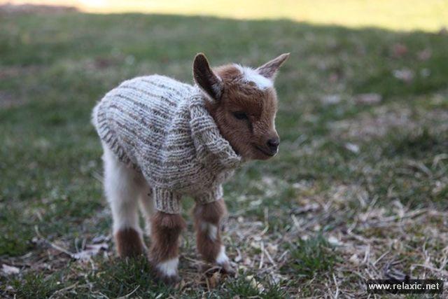 baby_goats_03 (640x427, 45Kb)