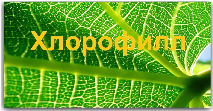 Хлорофилл (700x366, 420Kb)