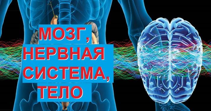 vtoroj-mozg (700x367, 125Kb)