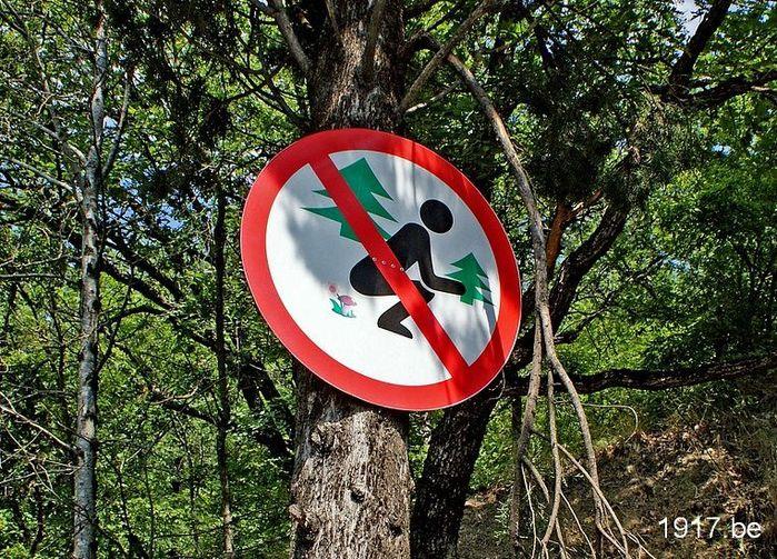 Не с.... в лесу!/1907332_forest (700x503, 155Kb)