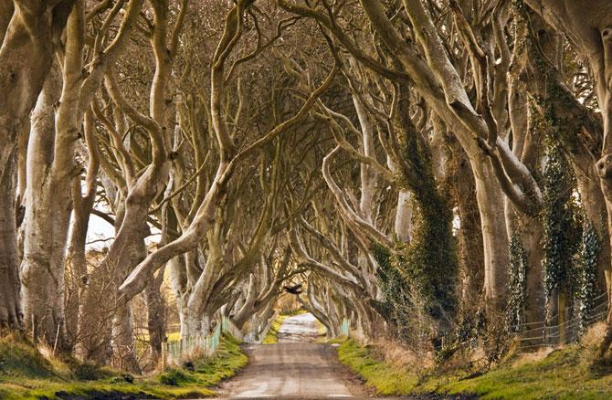 3. Северная Ирландия. Антрим. «Тёмная изгородь» (670x438, 393Kb)