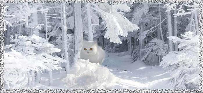 Белый-кот (700x323, 42Kb)