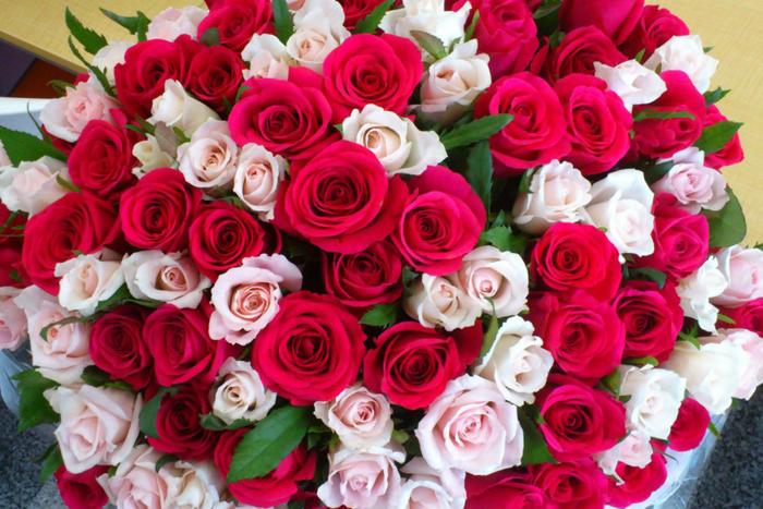 roses-2-875x584 (700x467, 502Kb)
