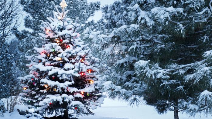 ёлочка зимой (698x393, 437Kb)