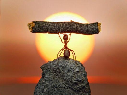 муравей (530x397, 23Kb)