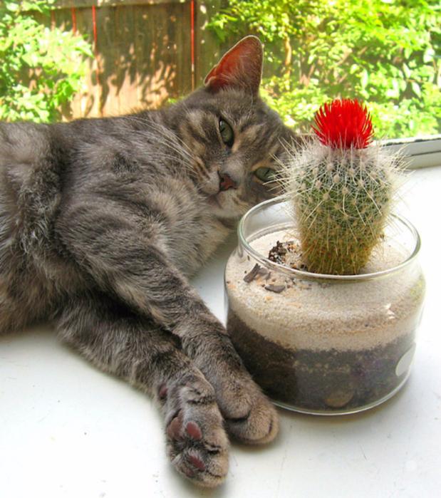 фото кактусовые котята