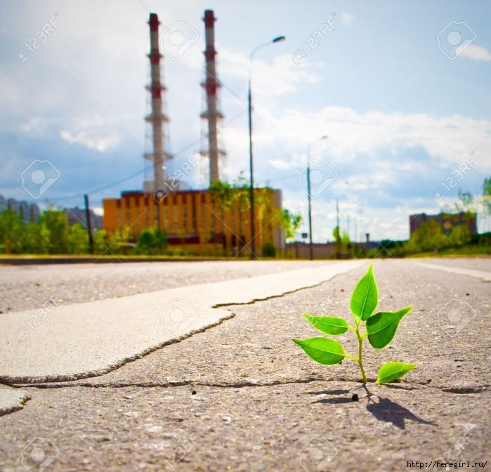 7033236-Young-plant-makes-the-way-through-asphalt-on-city-road--Stock-Photo (700x672, 229Kb)