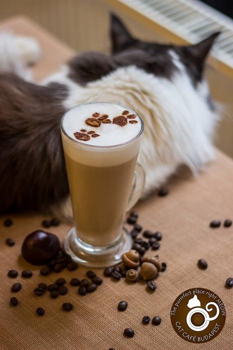 кафе с кошками будапешт 4 (466x700, 270Kb)