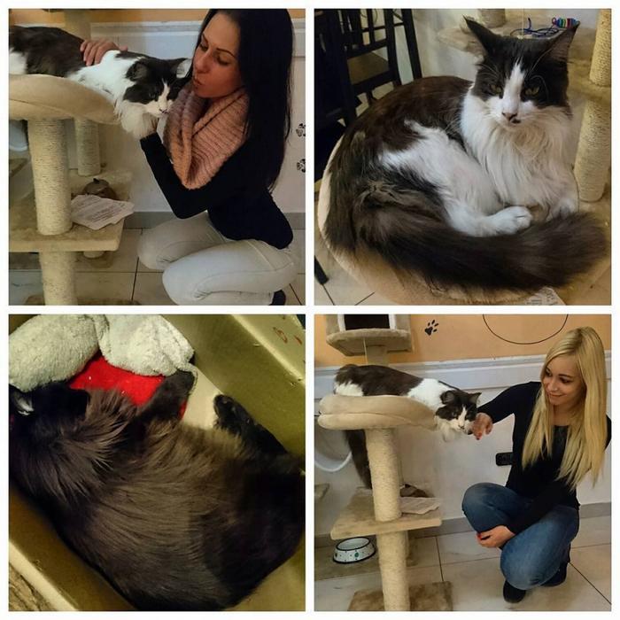 кафе с кошками будапешт 6 (700x700, 431Kb)