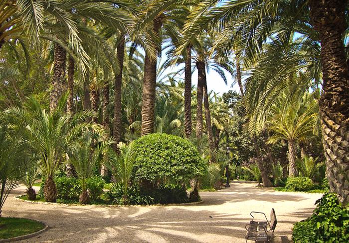 пальмовые рощи эльче 2 (700x487, 657Kb)