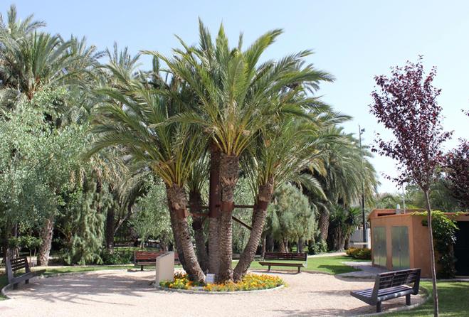 пальмовые рощи эльче 6 (659x446, 517Kb)
