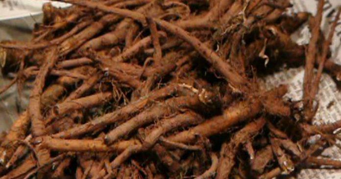 root-696x365 (696x365, 50Kb)