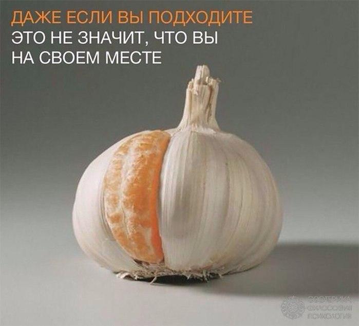 1827016_3uuBv84A5846258 (700x634, 48Kb)