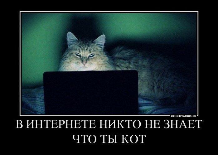 1418148222_demotivatory-pro-kotov-12 (700x497, 42Kb)