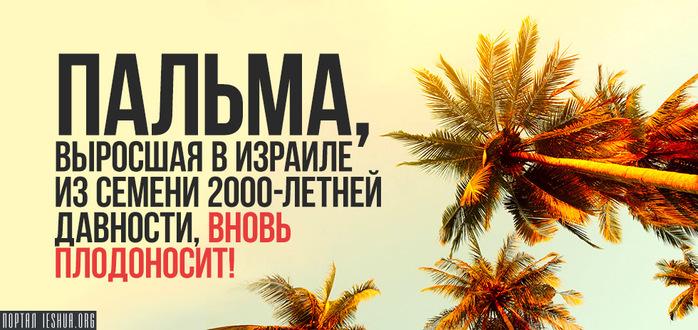 palm1 (700x330, 134Kb)