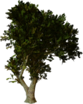 Превью All Natural (135) (557x700, 437Kb)
