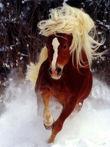 Лошадь/4807949_2 (353x470, 36Kb)