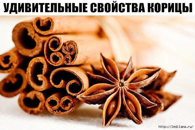 3925311_svoistva_korici (640x427, 200Kb)