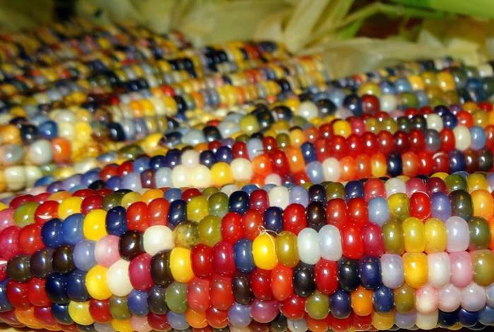 кукуруза2 (700x470, 447Kb)