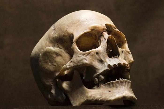 Удивительные кости черепа   факты