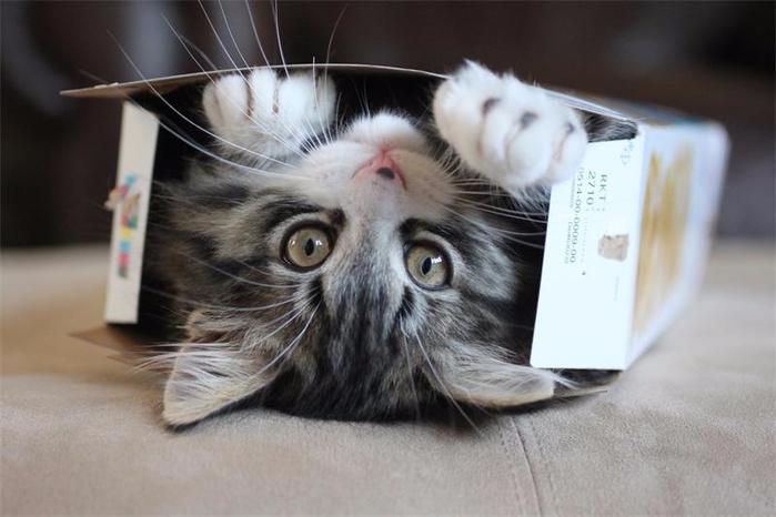 кошки в коробках фото 1 (700x466, 245Kb)