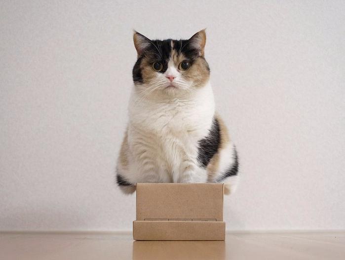 кошки в коробках фото 5 (700x528, 221Kb)