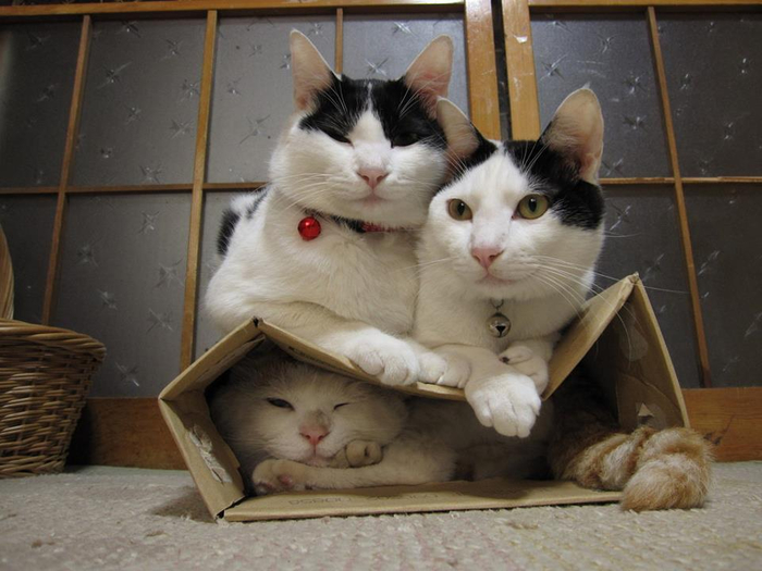 кошки в коробках фото 7 (700x525, 303Kb)