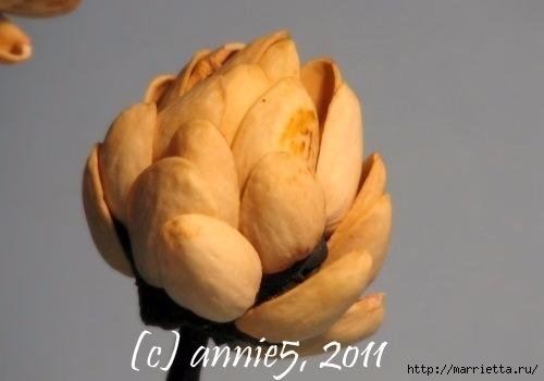 Цветы из шишек, семечек, листьев кукурузы, фисташек и макарон (6) (500x350, 67Kb)