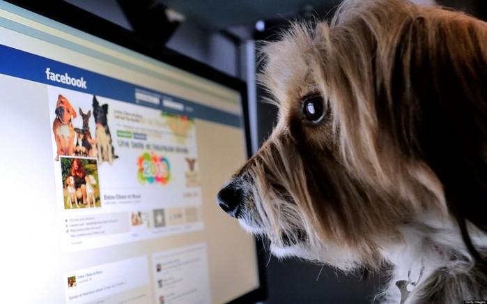Какие данные о пользователях собирает Facebook и как сохранить конфиденциальность