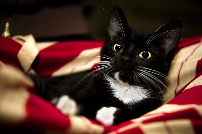 Кошки любят уют