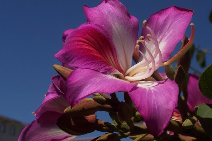 cveti-indii (700x466, 264Kb)