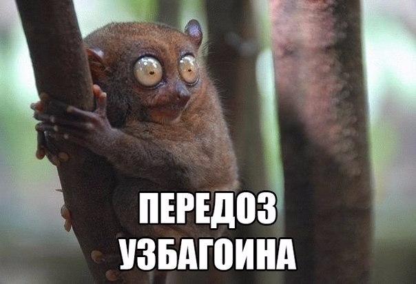 uzbagoysya8 (604x412, 175Kb)