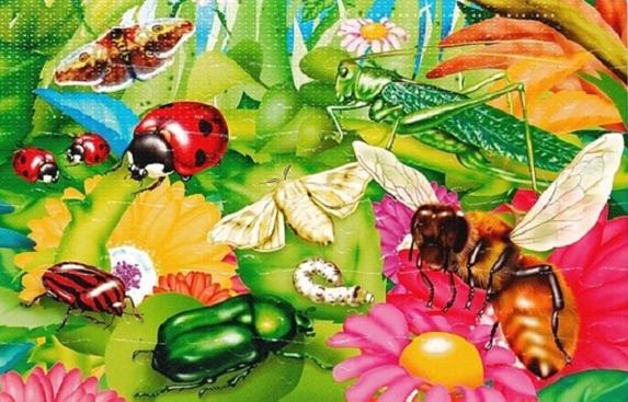 crop_164899144_ocCZoy8 насекомые (573x367, 356Kb)