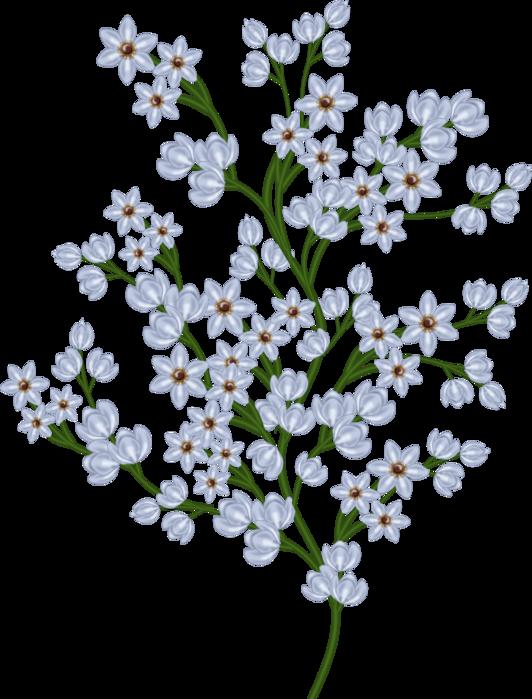 bsd_Floral Elegance_ Element (32) (532x700, 380Kb)