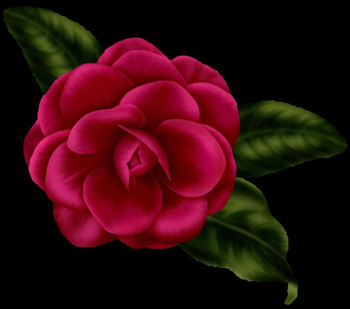 bsd_Floral Elegance_ Element (19) (700x616, 250Kb)