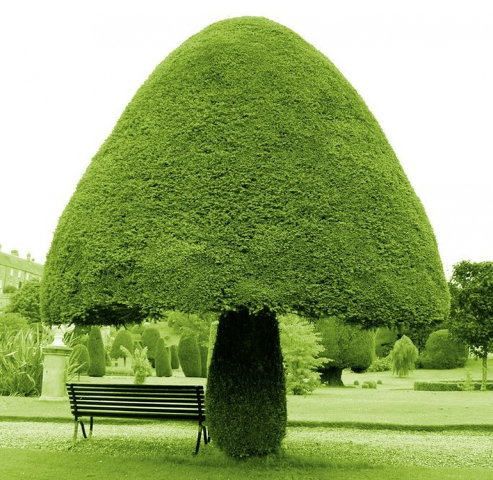 Дерево-гриб/3396275_ (700x682, 203Kb)
