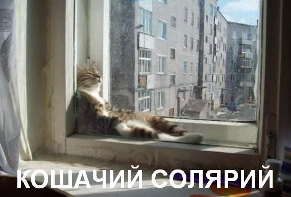 1338998665_1-koshachiy-solyariy (570x387, 136Kb)