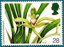 Орхидеи 2 (219x162, 25Kb)